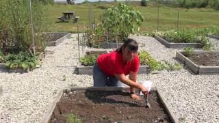 How to Grow Watermelons & Cantaloupes : Growing Melons