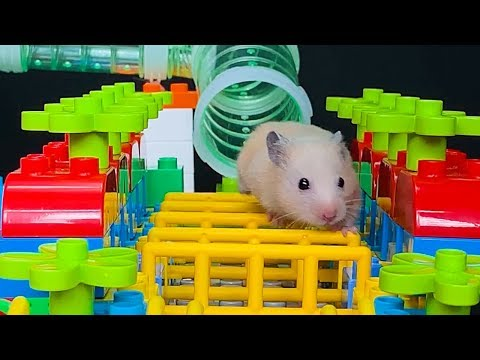 Hamster Yellow & LEGO Obstacle Course