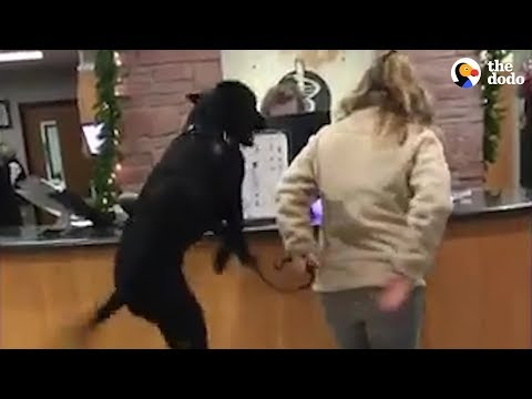 Dog Thinks Going To The Vet Is The Greatest | The Dodo