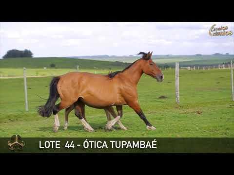 LOTE 44   ÓTICA TUPAMBAÉ