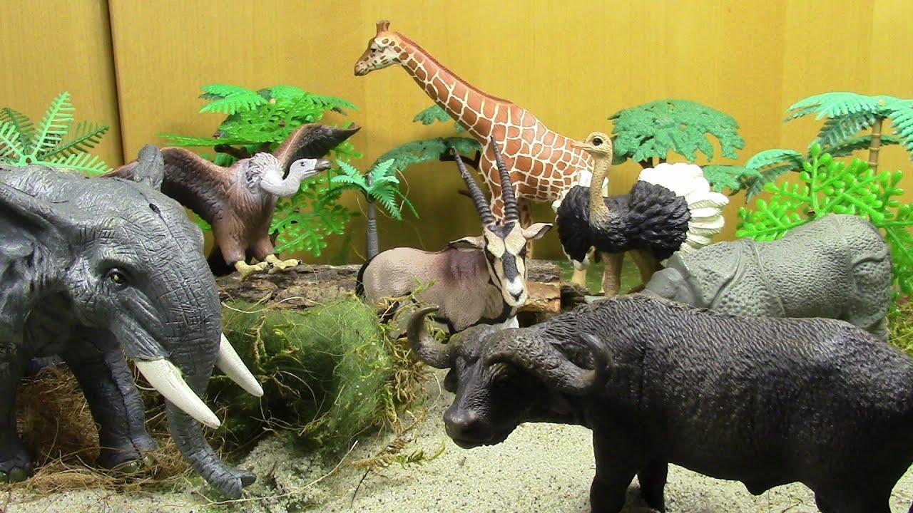 safari animals wild animal world youtube