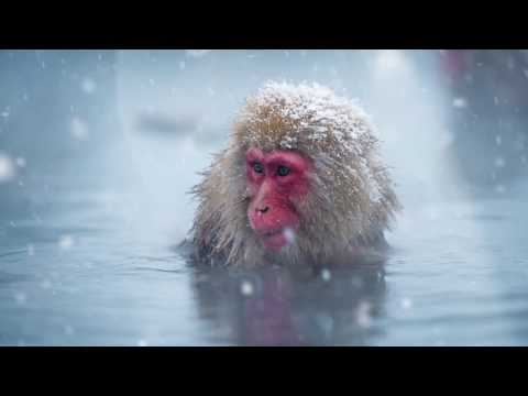 Social Media Advertising Showreel - Slow Motion Imagery - Still Image To Moving Image