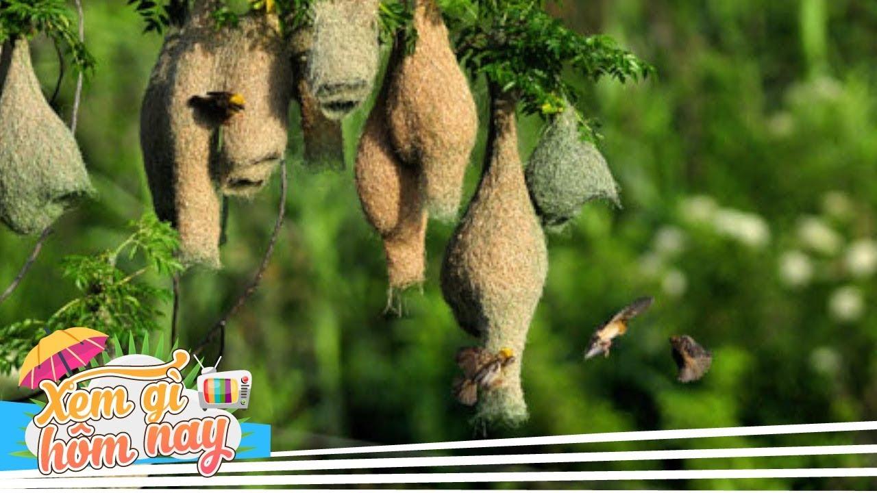 10 Kiến Trúc Tổ Chim Đẹp Nhất Thế Giới Khiến Các KTS Phải Ngưỡng Mộ