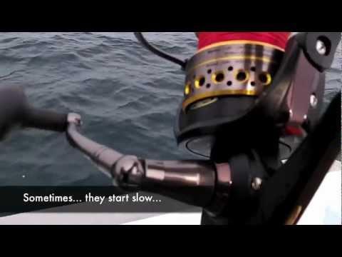PENN Battle Spin Reel And Rompin Sailfish