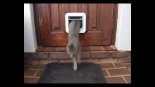 SureFlap Microchip Cat Flap : Demonstrated by Misty & Jack