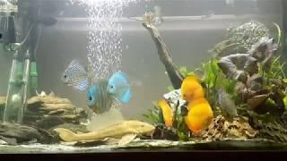 halak, amelyekben nincsenek paraziták és férgek)