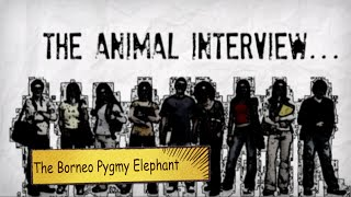The Animal Interview 2  Pygmy Elephant