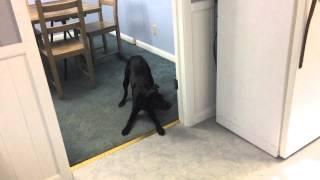 || Playful Pup! + I'm Sick :( || Thumbnail