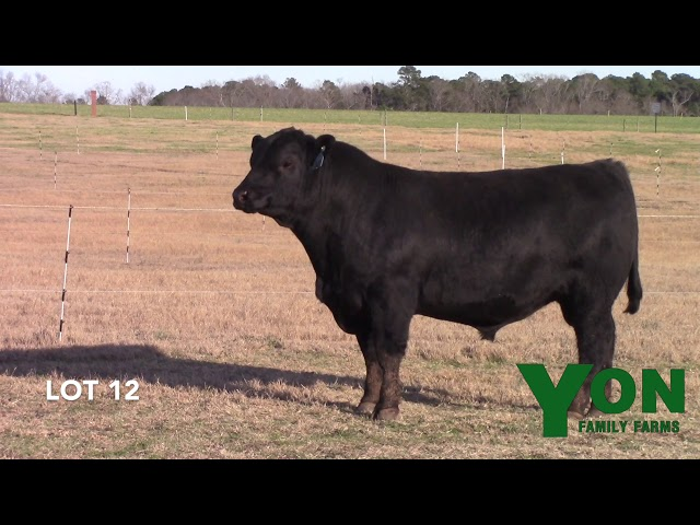Yon Family Farms Lot 12