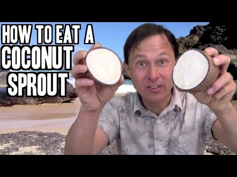 How to Eat a Coconut Sprout and Information about this Rare Superfood