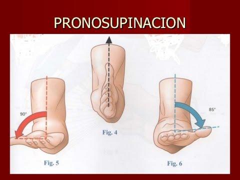 Prono supinador muñeca / Ejercicio Terapia ocupacional - YouTube
