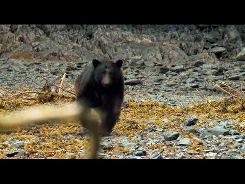 Melissa Bachman Shoots Charging Bear