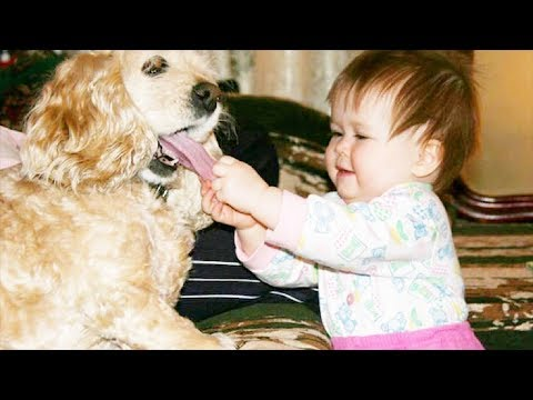 Cutest Babies And Dogs Doing Crazy Things Together | Cute babies Compilation