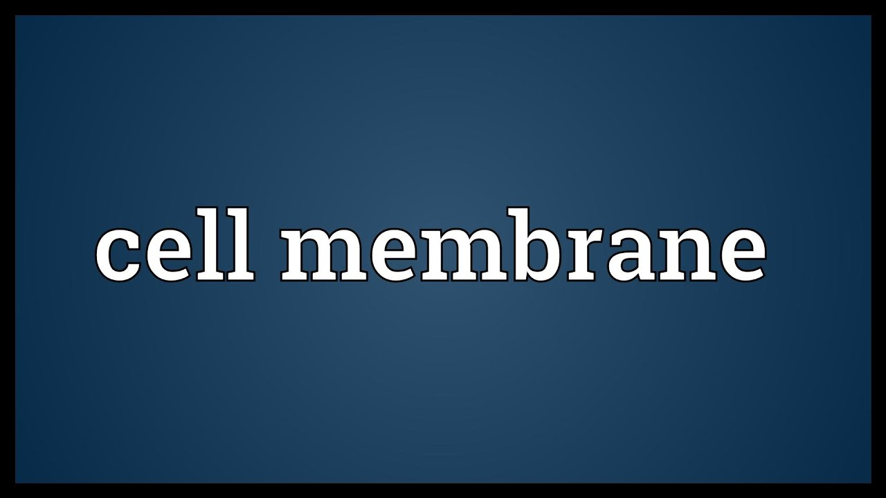 Cell membrane Meaning