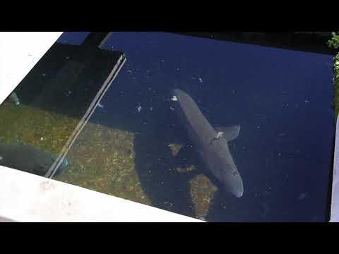 Idaho Gems- Fish Hatchery