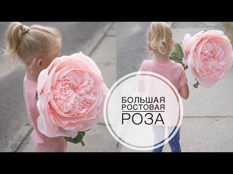 видео: Большая пионовидная роза из бумаги diy tsvoric