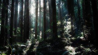 日々の雑音が届かないソロキャンプ wild solo camping