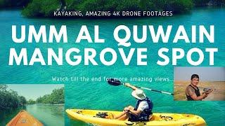 Umm Al Quwain Mangrove, UAE   Kayaking Cinematic