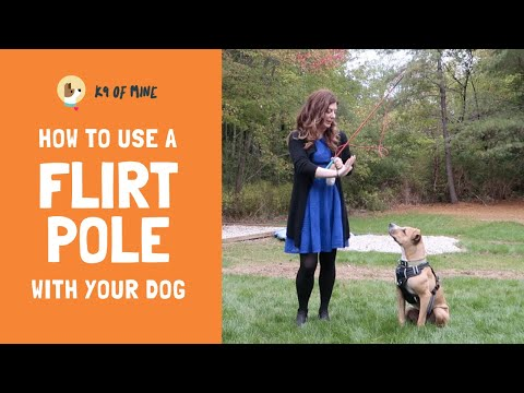 How to Use a Flirt Pole: Dog Training Fun!