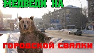 Медведи на городской свалки