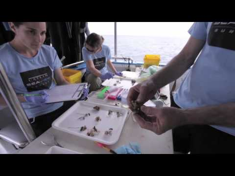 Deep Reef team collect corals as a part of the Catlin Seaview Survey