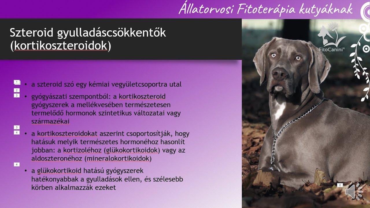 Gyulladáscsökkentő szerek és gyógynövények kutyáknak- FitoCanini® videó