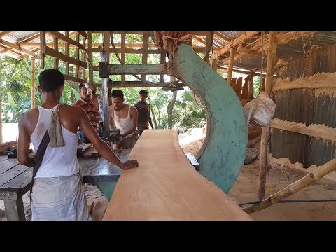 Kauri Tree Wood Board Cutting in Sawmill।Agathis Australis Board Cutting into Small Size।Red Wood