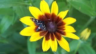 футажи для монтажа животные бабочки собаки и жуки для монтажа роликов и новостей
