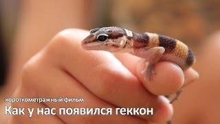 Как у нас появился геккон
