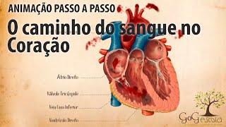 Oxigênio o sistema cardiovascular transporta