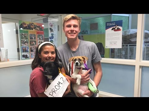 Humane Society Puppy Promposal Youtube