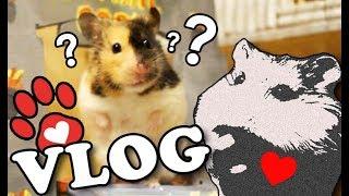 Neuer Hamster? ♥ Neues Haustier ♥ Miyukis Vlog