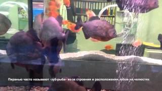 Морские аквариумы.(, 2014-04-20T05:28:01.000Z)