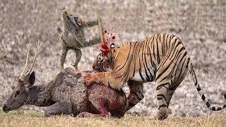 虎 攻撃 インパラ, 象 大 クロコダイル, ヒョウ 大 虎, ヘビ 大 マング...