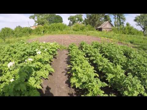 Овощи на огороде правила выращивания овощей