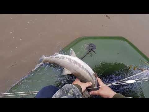 рыбалка сетью на