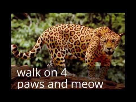 cat sanctuary maryland