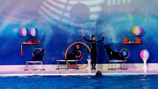 Dolphin Show at Dubai. A must watch show. Best in the world