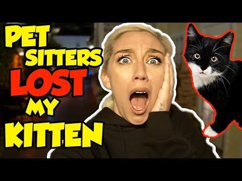 PET SITTERS LOST MY KITTEN!