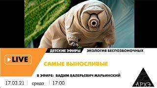 """Детский эфир """"Самые выносливые"""" рубрики """"Экология беспозвоночных"""""""
