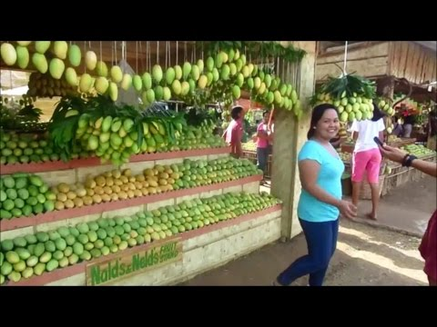 Mango Festival ~ Final Day ~ Sweetest Mangos in the World ~ Guimaras Island, Philippines