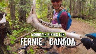 Mountain Biking Fun In Fernie Bc Canada