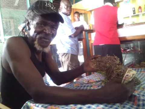 Healing Herbs- The Moringa Fruit & Seed - Jamaican Herbalist