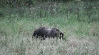 "Медведь на овсах ""Беркут-С"""