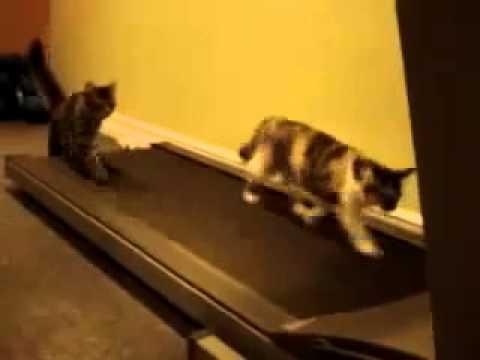 смешные картинки про кошек скачать