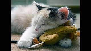 Вхождение в Осознанный Сон: техника силы намерения