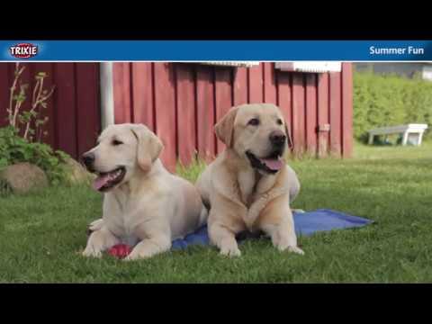 Unsere Sommerprodukte verschaffen Hunden Abkühlung bei heißen Temperaturen - TRIXIE