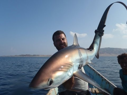 Thresher Shark, jigging in Socotra