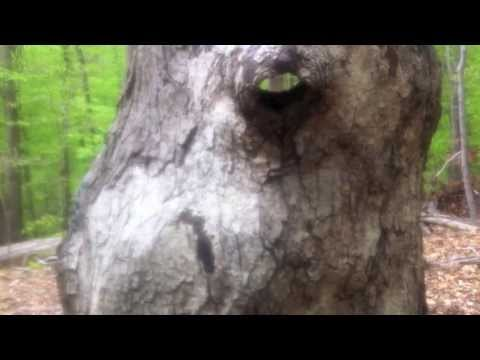 Surveillance Footage: Rock Creek Park, Washington, DC ~Eve Hennessa
