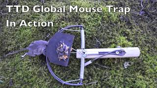 ttd global mouse trap in action a modern version of a 8 000 year old trap